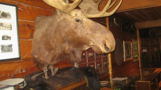 Clearwater Historic Lodge: Common area nuisance: Stuffed Moose Head Infestation