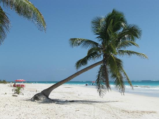 Playa Paraiso: Is this gorgeous or what?