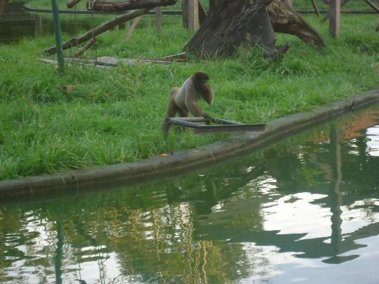 CIGS Zoo: :)
