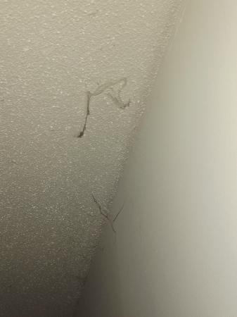 نوفوتيل كوفس هاربور باسيفيك باي ريزورت: spiderweds