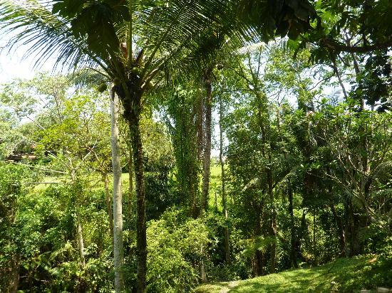 Komaneka at Monkey Forest: Pool Veiws