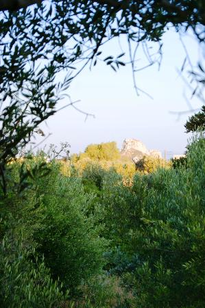 Nefeli Apartments: A Walk Just Beyond the Olive Grove