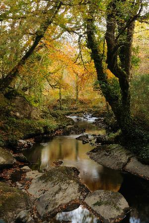 Glengariff Woods: Glenngarriff Woods