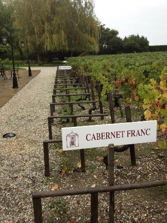 Chateau Cordeillan-Bages: vinmarken utenfor hotellet