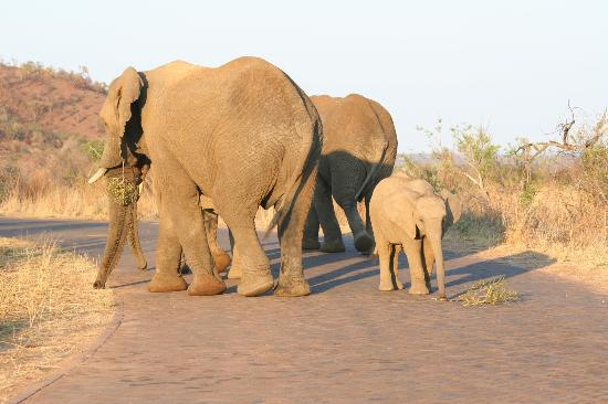 Kwa Maritane Bush Lodge: Elephant Family