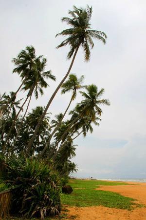 Serene Pavilions: beach