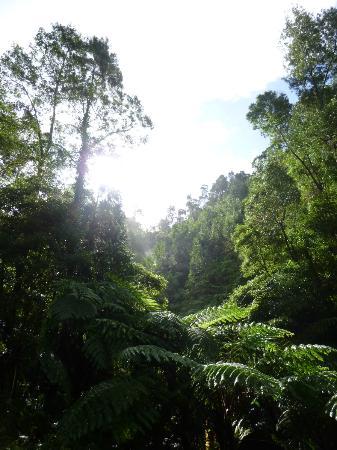 Environmental Interpretation Centre of Caldeira Velha: Surrounding vegetation
