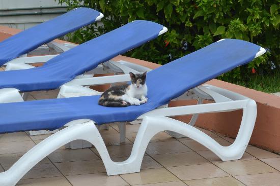 Hotel Club Al Moggar: poolside