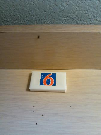 Motel 6 Corpus Christi Northwest: roaches on the tables and lamps