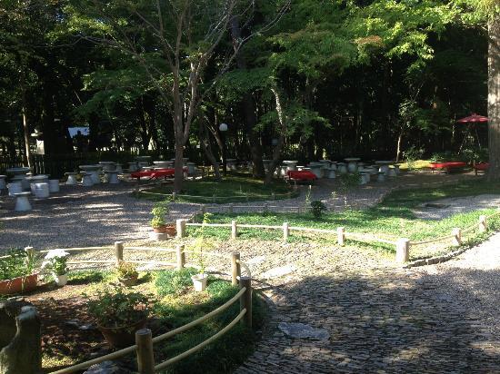 나라 공원 사진