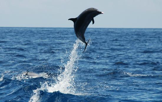 Anse Chastanet: Lucky shot while whale watching