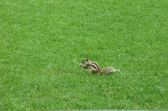 The Claridges New Delhi: Streifenhörnchen im Gartenbereich