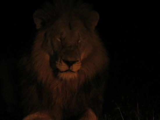 Tintswalo Safari Lodge: Hearing this guy roar in duet with his brother on our first night was awesome!
