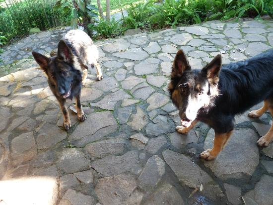 Pura Vida Hotel: Lola and Bandit - we love them