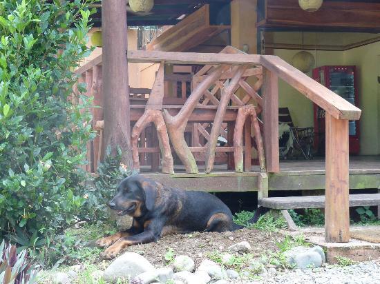 Pita Bonita: Friendly dog