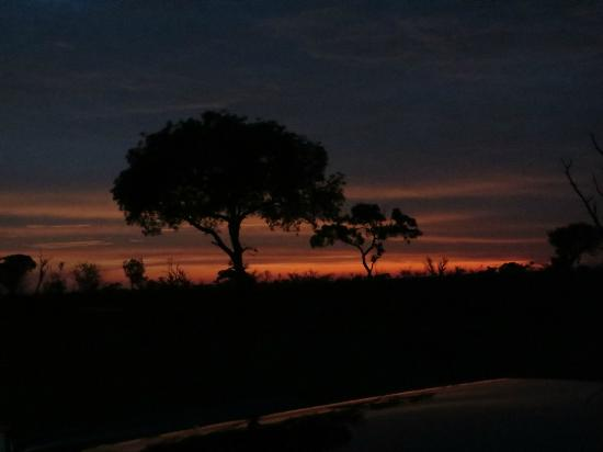 Londolozi Varty Camp: Beautiful bush sunset!