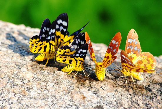 Brahmaputra Jungle Resort: on bird watching trip
