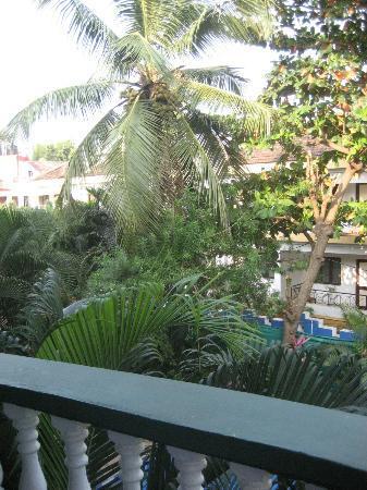 Hotel Villa Theresa: coconat palm