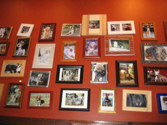 Vickery's Bar & Grill - Glenwood Park: Pictures of dogs on the wall in the bar area