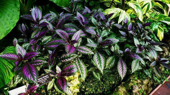 링컨 파크 식물원 사진