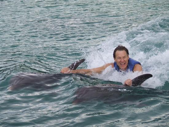 Tour to Dolphin Cove with PG Tours Jamaica