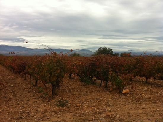 Riojatrek: Saber más del vino