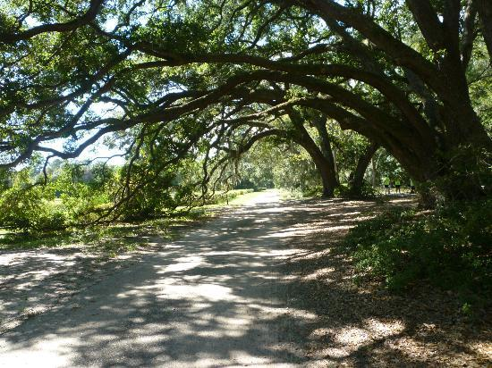 Charleston Tea Plantation: Lovely low country drive