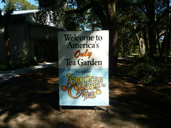 Charleston Tea Plantation: The Tea Garden