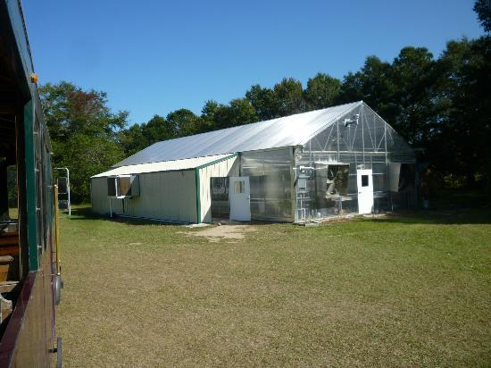 Charleston Tea Plantation: The new greenhouse