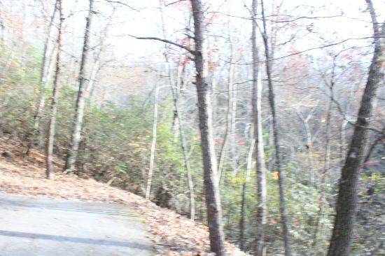 Dillard House: VERY Steep Driveway