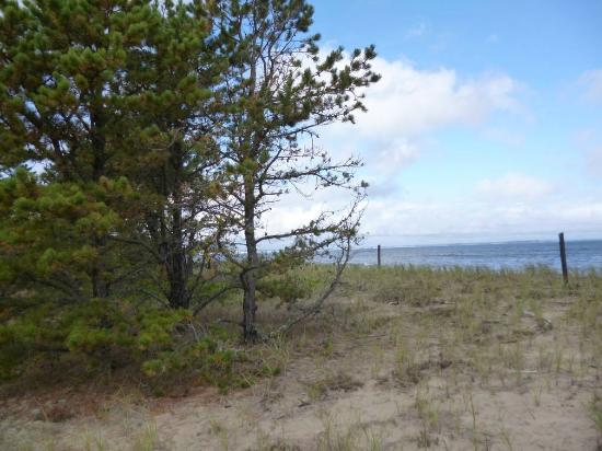 Ferry Beach State Park: Ferry Beach pines and ocean