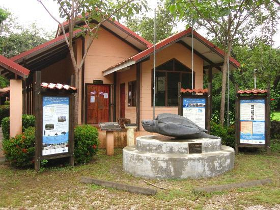 Hotel Las Tortugas: Down the road where you meet for turtle tours