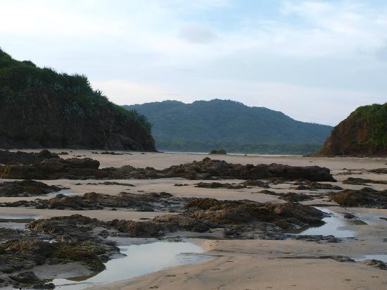 Hotel Las Tortugas: Check out the tidepools at low tide