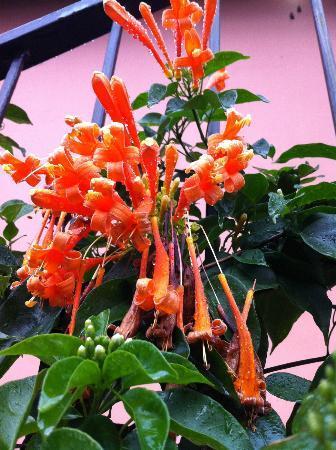 بوكويت جاردن إن هوتل: Beautiful Flora everywhere!