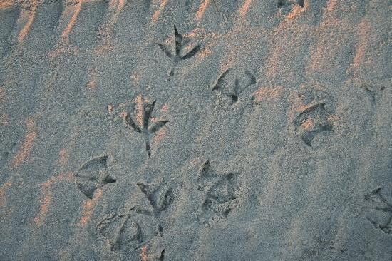 Myrtle Beach Sc Seagull Prints