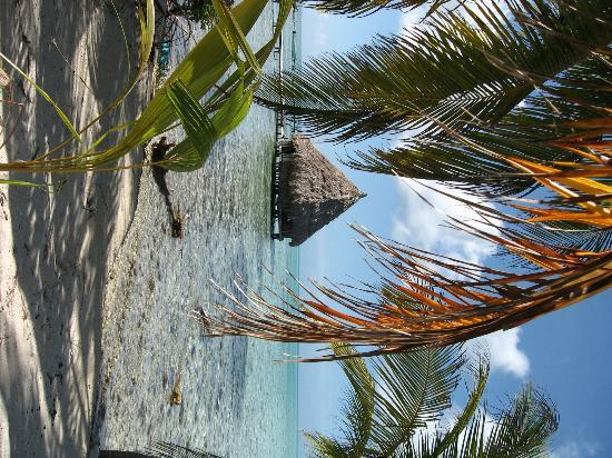 Glover's Atoll Resort : yes, really...