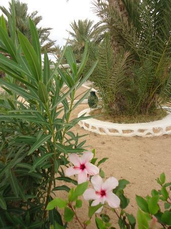El Mouradi Djerba Menzel: la végétation