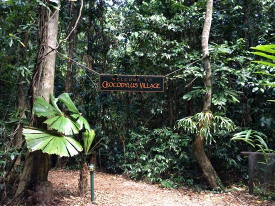 Daintree Crocodylus: Entering the jungle!