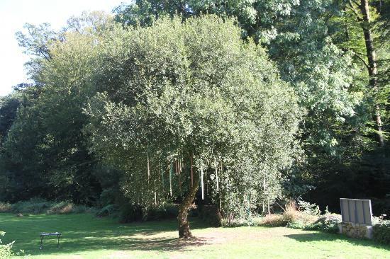 Le Moulin de la Touche : the decorated wedding tree