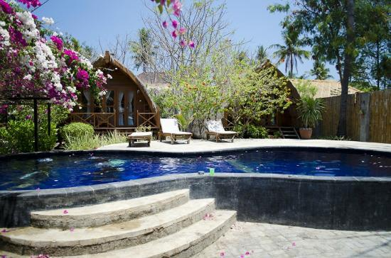 Manta Dive Gili Air Resort : Pool - Notice the Divers in it