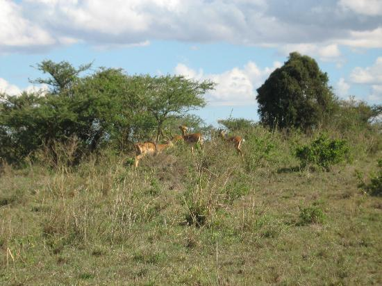 Nairobi National Park: Wildlife