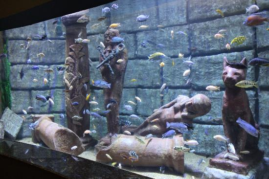 Antalya Aquarium: egyptian tank