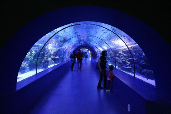 Antalya Aquarium: tunnel