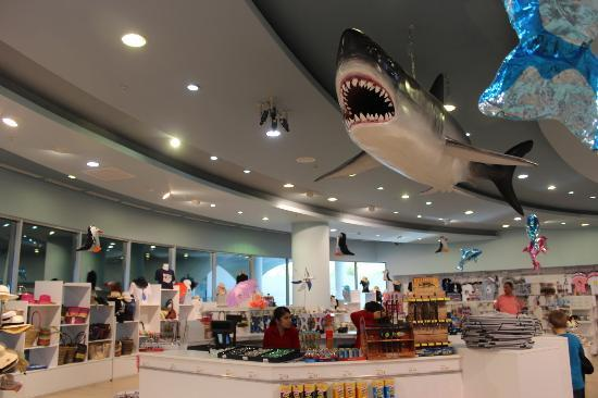 Antalya Aquarium: gift shop