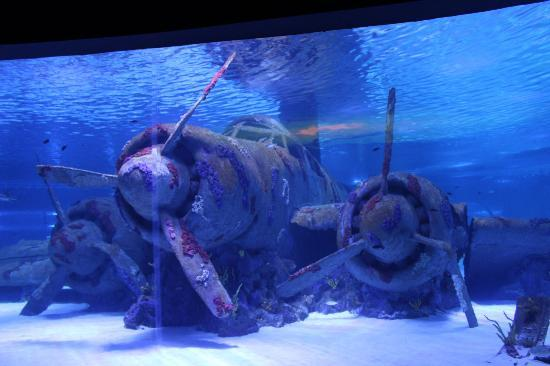 Antalya Aquarium: main tank airplane wreck