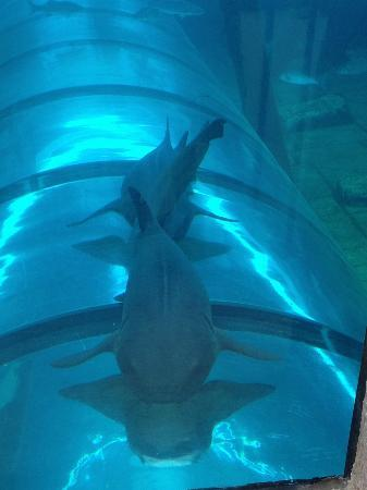 Siam Park: Sharks on top of the tubes when you go through the Lazy River