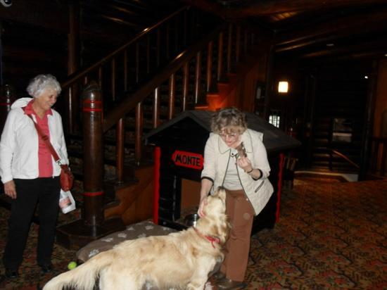 Fairmont Le Chateau Montebello: Monte with his kennel