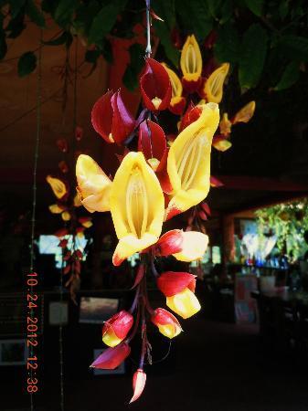 Vallarta Botanical Gardens : Wow
