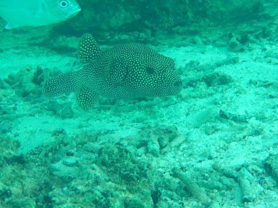 Cinnamon Hakuraa Huraa Maldives: Bunte Fische