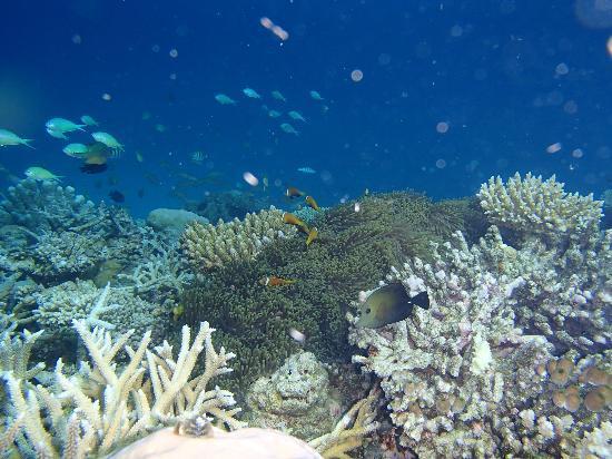 Cinnamon Hakuraa Huraa Maldives: Riff